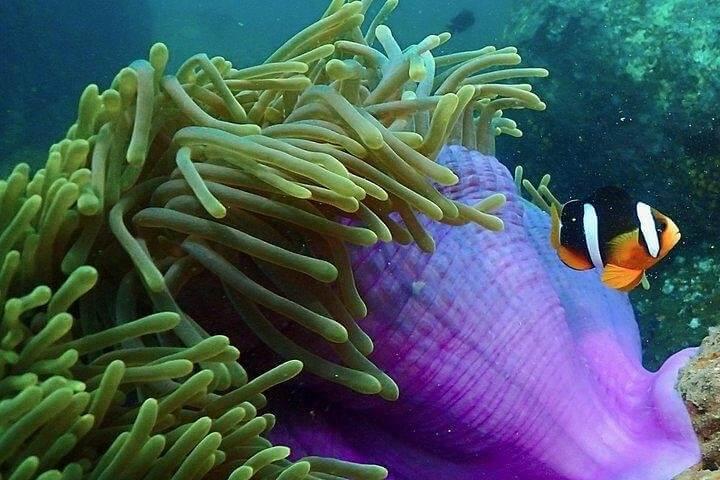 the best PADI Underwater Naturalist Course with Diving Guru