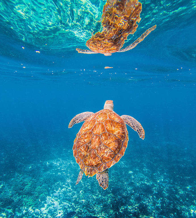 What is the best time to snorkel on Pigeon Island? Where to see the most sea turtles in Sri Lanka? How much does ticket to Pigeon Island cost? Visit our website for more info